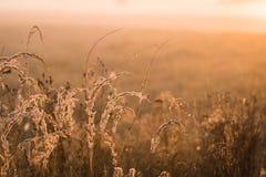 Chíbese las flores en el campo en el fondo de la luz del sol, foco selectivo foto de archivo libre de regalías