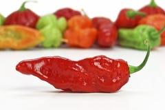 chłodna gorącego pieprzu czerwień zdjęcia stock