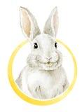 Chłodno Śmieszny Uśmiechnięty królik ilustracji