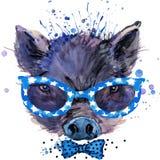 Chłodno Świniowate koszulek grafika, świniowata ilustracja z pluśnięcie akwarelą textured tło Fotografia Royalty Free