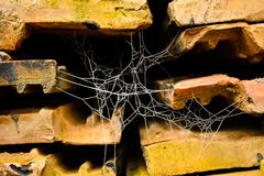 Chłodno Halloweenowa pajęczyna zdjęcie stock