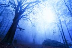 Chłodno nastrój w mgłowym drewnie fotografia stock