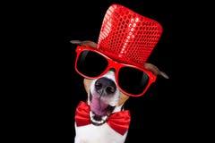 Chłodno okulary przeciwsłoneczni pies Fotografia Royalty Free