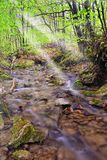 chłodno parkowy strumień Obraz Royalty Free