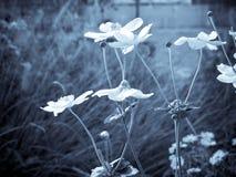 Chłodno pole kwiaty Zdjęcia Royalty Free