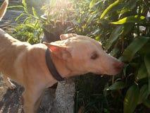 Chłodno psi status szczęśliwy jeden fotografia stock