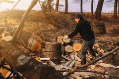 Chłodny mężczyzna ciie gęstego stałego popiółu drzewa zbiera drewno dla zimnej zimy zdjęcie stock