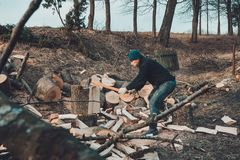 Chłodny mężczyzna ciie gęstego stałego popiółu drzewa zbiera drewno dla zimnej zimy obrazy royalty free