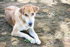 Chłodzić psa zdjęcie royalty free