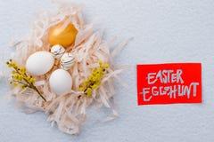 chłopcy tła Wielkanoc jajka miłych jaj trawy zielone świeżego ukryte hunt wyizolował poszukiwania white obrazy stock