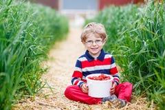 Chłopiec łasowania i zrywania truskawki na jagodzie uprawiają ziemię Obrazy Royalty Free