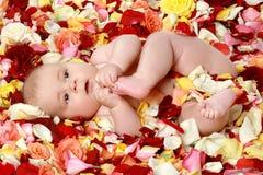 chłopiec śliczna płatków róża mała Fotografia Stock