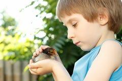 Chłopiec śliczni uściśnięcia chiken w ręki natury lecie plenerowym obraz stock