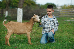Chłopiec żywieniowa kózka w ogródzie zdjęcia stock