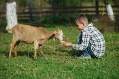 Chłopiec żywieniowa kózka w ogródzie obrazy stock
