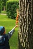 Chłopiec żywieniowa wiewiórka w parku zdjęcia royalty free