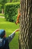 Chłopiec żywieniowa wiewiórka w parku Obraz Stock