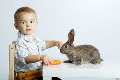 Chłopiec żywieniowy królik z marchewką fotografia stock