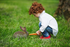 Chłopiec żywieniowy królik z marchewką w parku fotografia stock