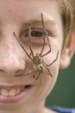 chłopiec (1) pająk Obraz Royalty Free