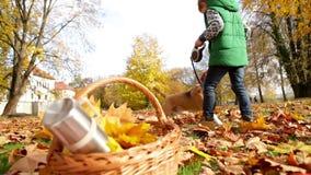 Chłopiec bawić się z jego beagle psem w jesień koloru żółtego parku zbiory
