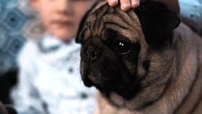 Chłopiec bawić się z psem w domu na leżance zbiory wideo
