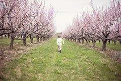 Chłopiec bieg w brzoskwinia sadzie zdjęcia stock