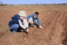 chłopiec cebuli nasiewanie obraz stock