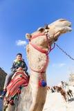 Chłopiec cieszą się z wielbłądem obraz royalty free