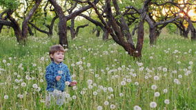 Chłopiec dmuchanie na dandelions zbiory wideo