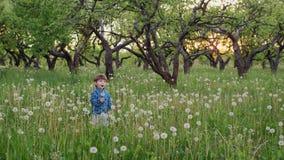Chłopiec dmuchanie na dandelions zbiory