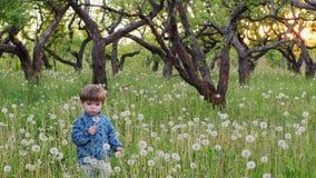 Chłopiec dmuchanie na dandelions zdjęcie wideo