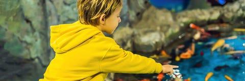 Chłopiec, dzieciak ogląda tłum rybi dopłynięcie w oceanarium, dzieci cieszy się podwodnego życie w akwarium sztandarze zdjęcia stock