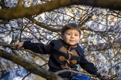 Chłopiec dzieciaka obwieszenie od okwitnięcie wiosny drzewa i mieć zabawa w naturze Zdjęcia Royalty Free