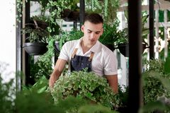 Chłopiec fartucha kwiatów atrakcyjnego młodego cukiernianego szklarnianego projekta wewnętrzny udział wiele garnek rośliien portr fotografia stock