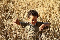 Chłopiec gubjąca w polu banatka Zdjęcia Stock