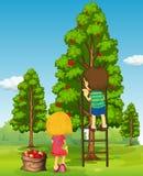 Chłopiec i dziewczyny zrywania jabłka od drzewa Zdjęcia Royalty Free