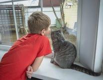 Chłopiec i kot przyglądający out okno Zdjęcia Royalty Free