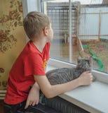 Chłopiec i kot przyglądający out okno Obrazy Royalty Free