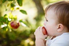 Chłopiec je jabłka obrazy royalty free