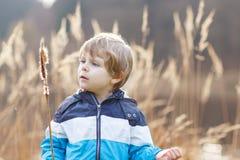 Chłopiec ma zabawę z sitowiem blisko lasowego jeziora Fotografia Royalty Free