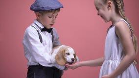 Chłopiec mienia szczeniak, dziewczyny karmienia pies od otwartej palmy, zwierzęta kocha i dba zdjęcie wideo