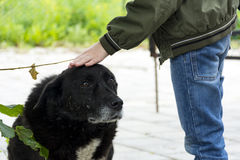 Chłopiec muska głowę czarny przybłąkany pies, kundel z sa Zdjęcia Royalty Free