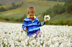 Chłopiec na polu narcyz w wiośnie zdjęcie stock