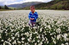 Chłopiec na polu narcyza poeticus w wiośnie Zdjęcia Royalty Free