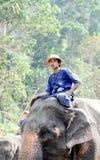 chłopiec obozowy słonia maesa tajlandzki z Obraz Royalty Free