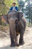 chłopiec obozowy słonia maesa tajlandzki z Obrazy Royalty Free