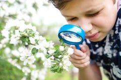 Chłopiec patrzeje kwiatu przez magnifier zdjęcie royalty free