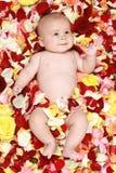 chłopiec piękne rośliny wzrastali Obrazy Stock