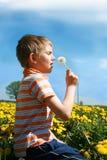 chłopiec podmuchowy dandelion trochę Obrazy Stock